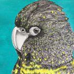 Black Cockatoo