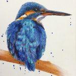 Kingfisher Kraze #1