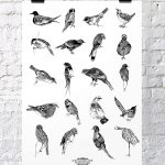 Illustrated guide to British Birds