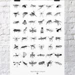 Terrestrial Arthropods