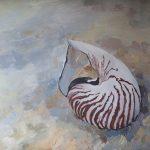 Nautilus Shell on Beach