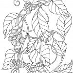 Plant 130 – Kangaroo Vine (also called Wild Grape and Wild Apple) – Cissus antarctica