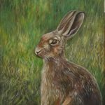 Hare in a green field