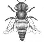 Bumble Bee Ltd Ed Print
