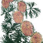 Birthday Candlestick Banksia Ltd Ed Print