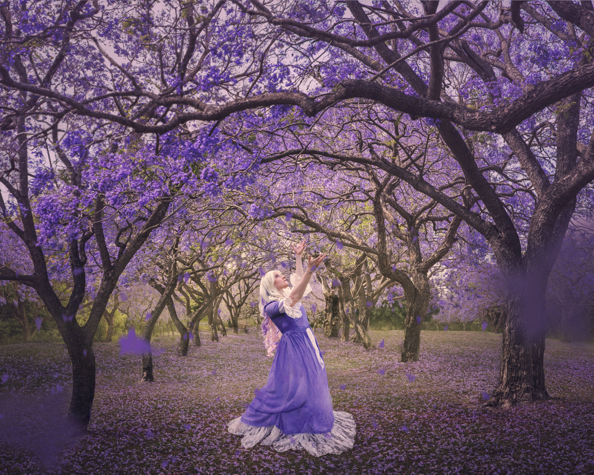 dance-of-the-jacarandas