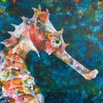 Seahorse – Ltd Ed Print