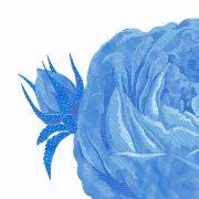 fineart-chintz-rose-10x8cu