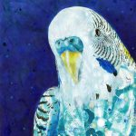 Budgie Love – Ltd Ed Print