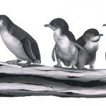 Little Penguin Limited Edition Print