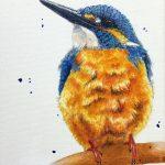 Kingfisher Kraze #3