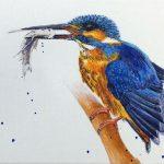 Kingfisher Kraze #2