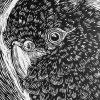 Black Cockatoo Lino Print Detail