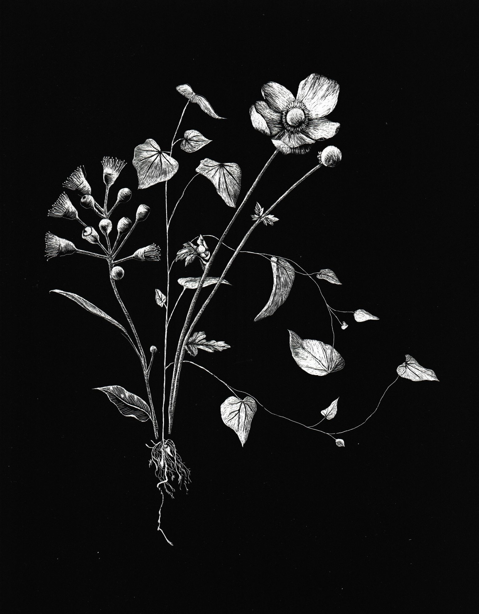 sold-botany-scanned-low-res