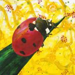 Fly Away Home – Ladybug