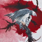 Graceful Power – Harpy Eagle