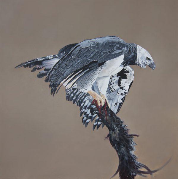 Graceful Power Harpy Eagle V2