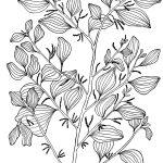 Plant 5 – Mistletoe Tree– Exocarpus latifolius
