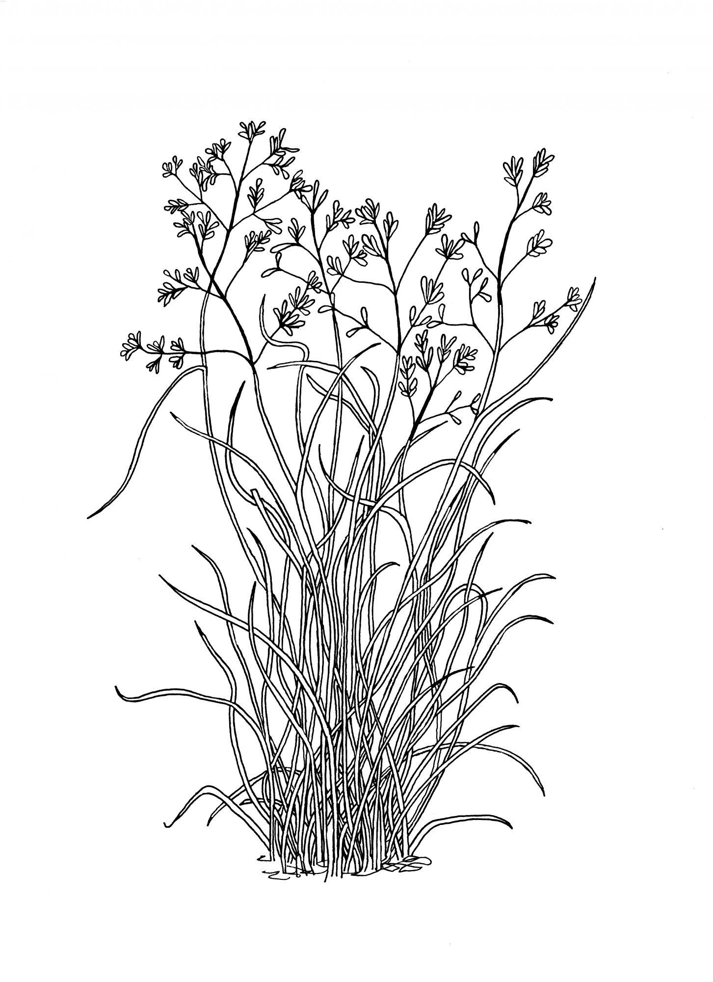 plant-265