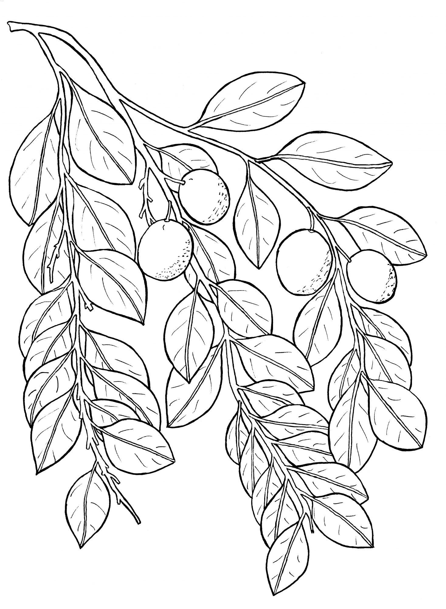 plant-310