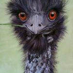 East Gippsland Boy – Emu Painting