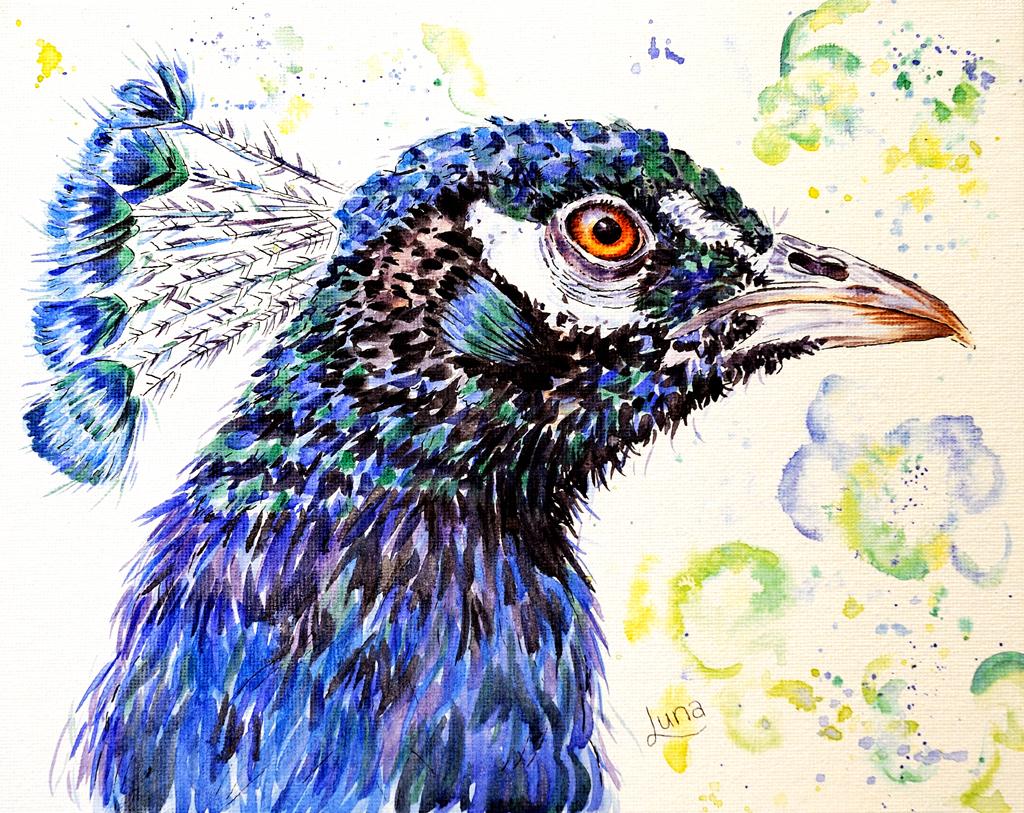 peacock-internet