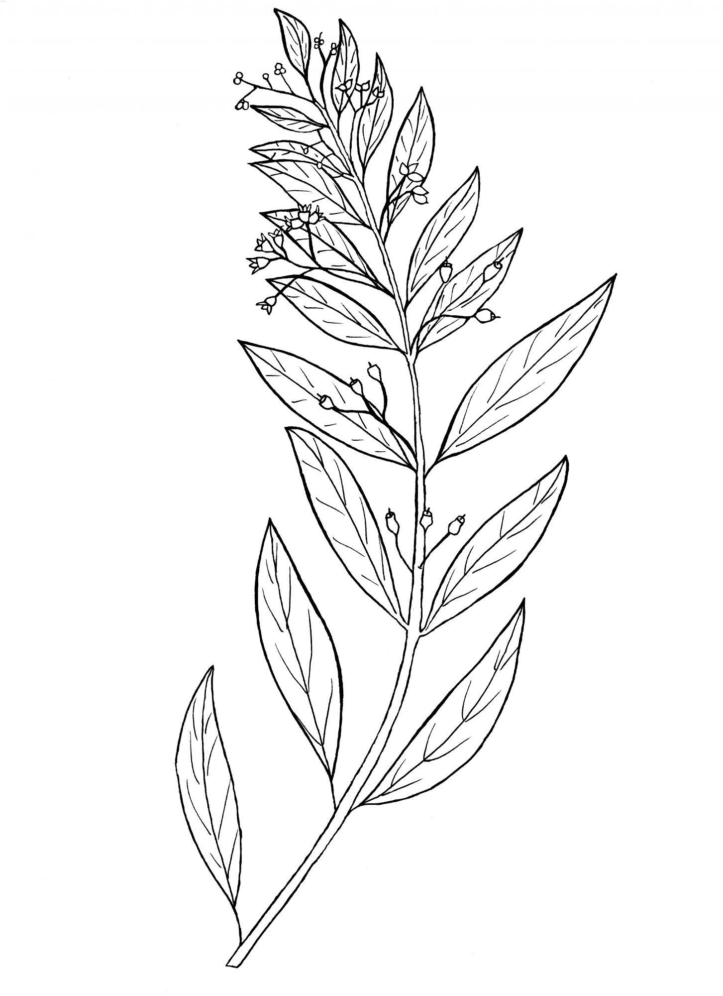 plant-04