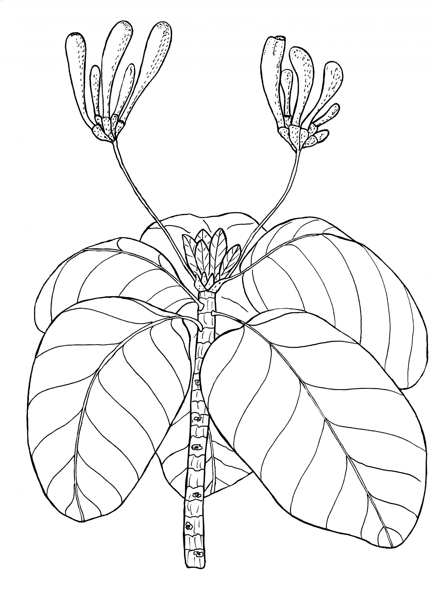 plant-07