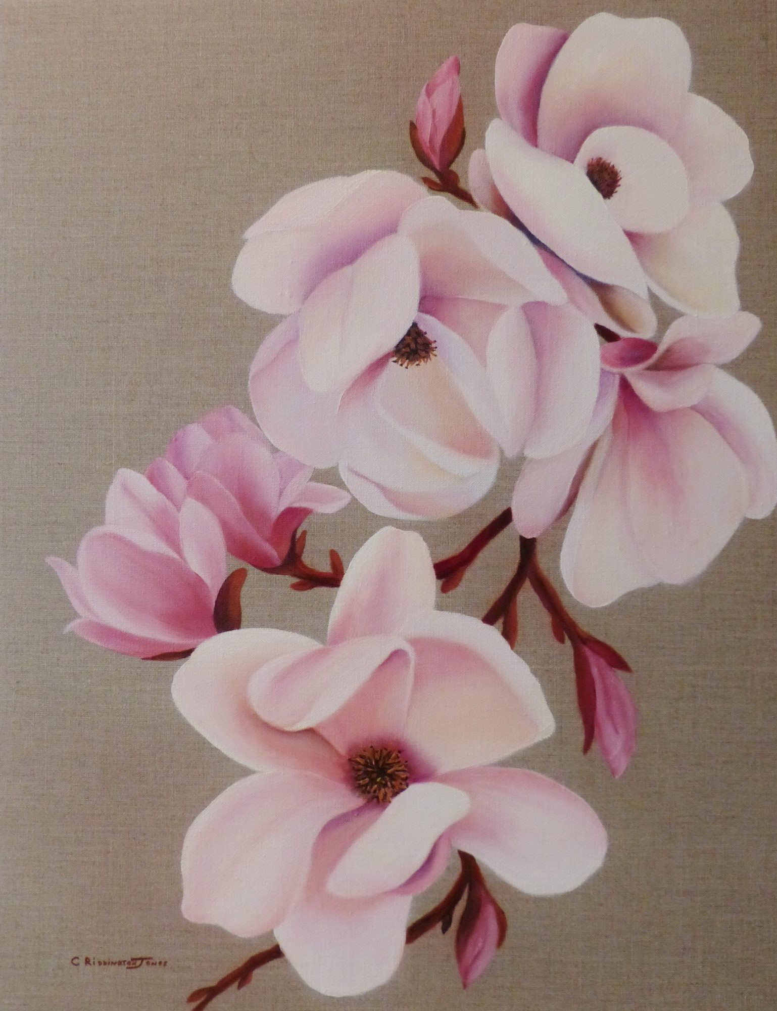 ancient-species-magnolia-clare-riddington-jones-oil-on-linen-55cm-x-70cm