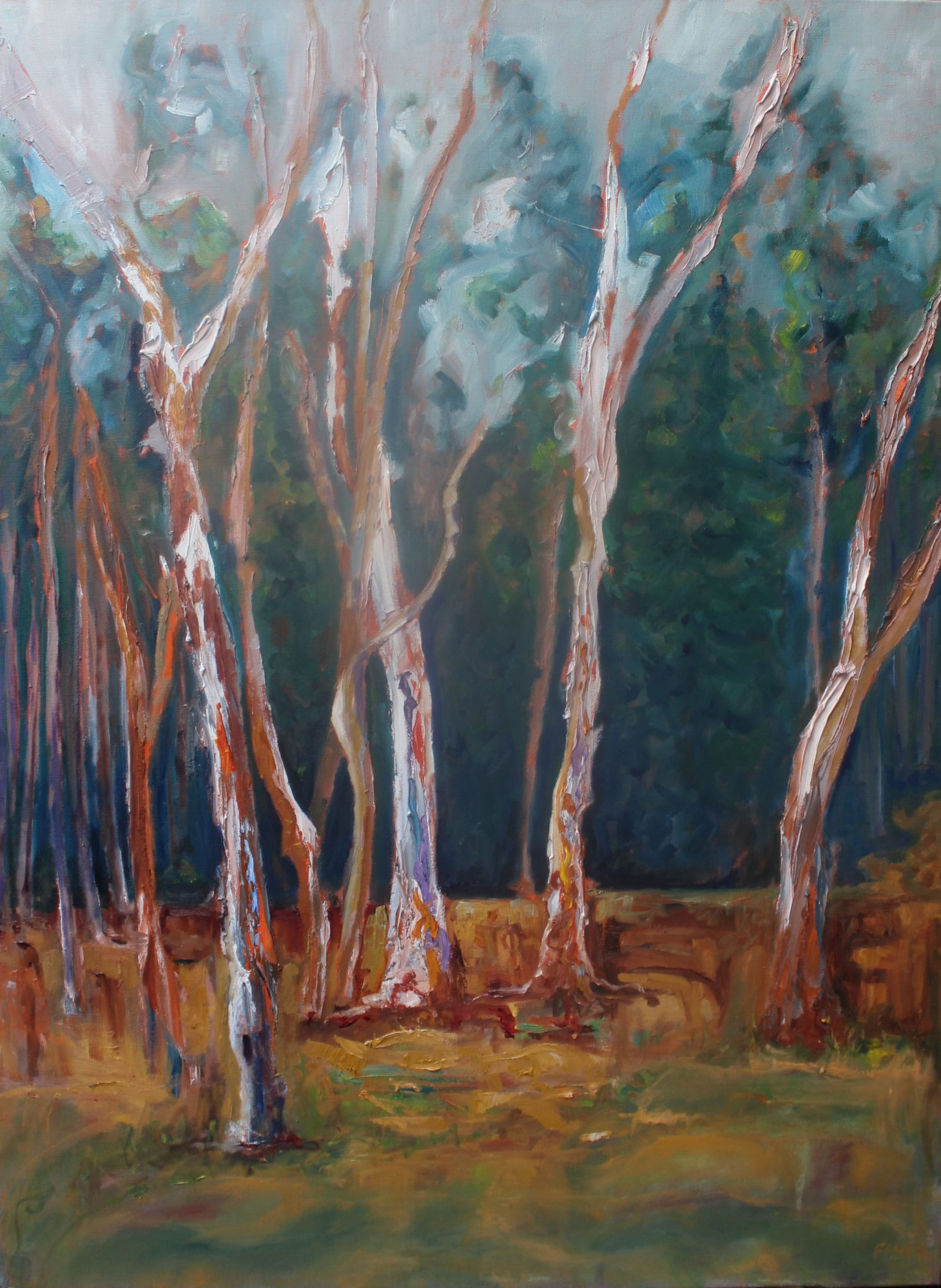 where-gum-trees-meet-the-pine-forest-76x103cm-oil-and-acrylic-on-canvas-600-00-copy