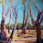 Gum Trees of the Mid North