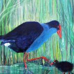 Purple Swamp-Hen