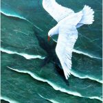 Soaring above the Waters – SOLD