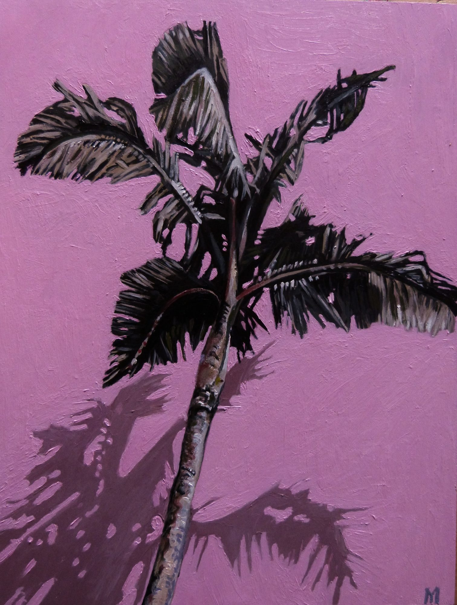 Palm on Pink, 2018