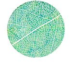 Reticulate leaf venation limited edition print