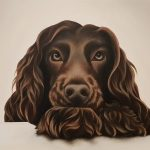 Chocolate Cocker Spaniel