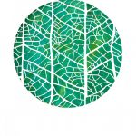 Cross venulate Leaf venation limited edition print