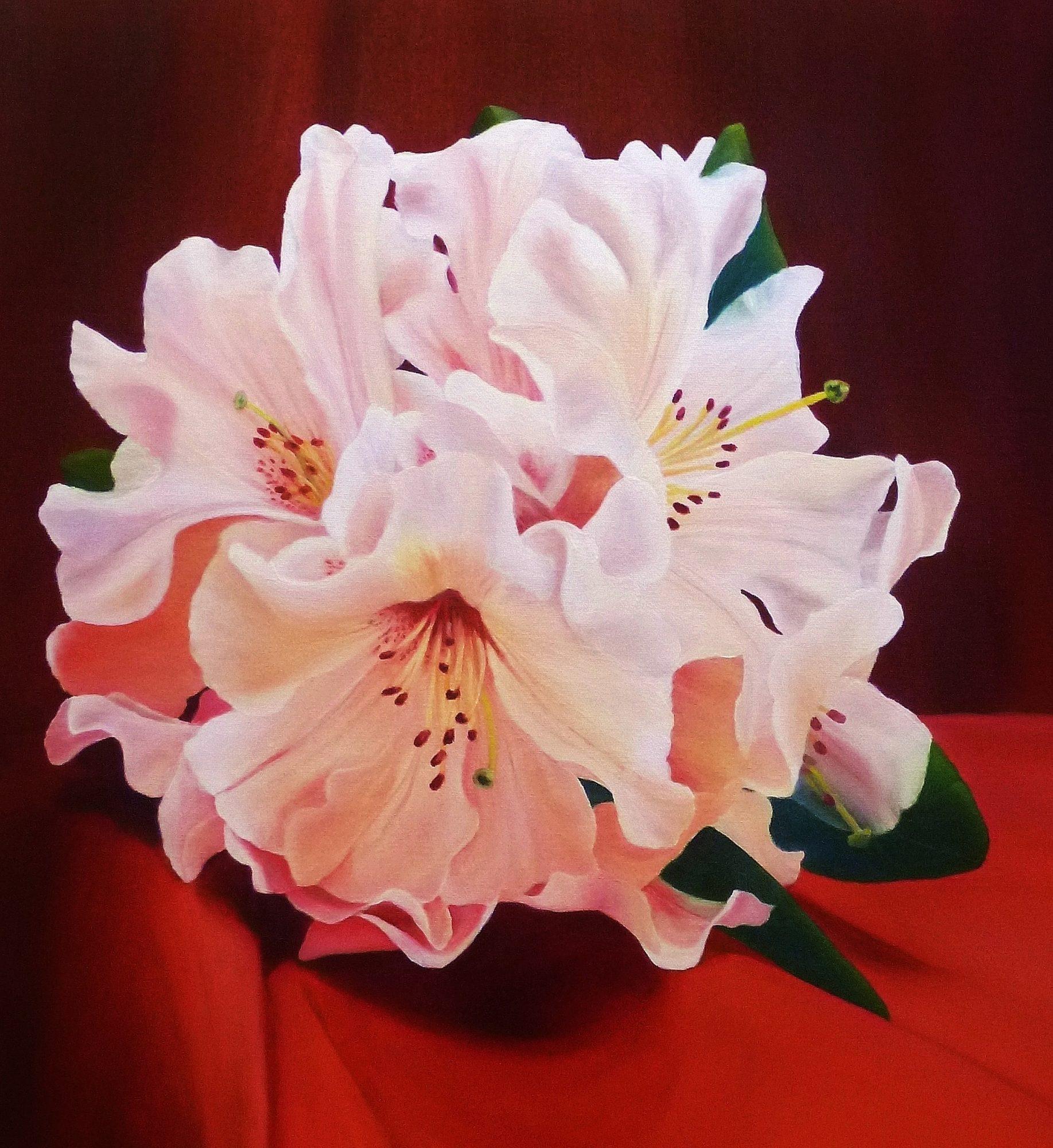 Rhododendron, Oil, 90cm x 60cm   $1200