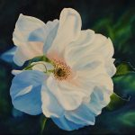French Beauty,  Rugosa Rose Ltd Ed Print