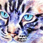 Catsanova