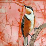 Feathery all-sorts No 3 – Eastern Spinebill