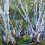 RED RIVER GUMS