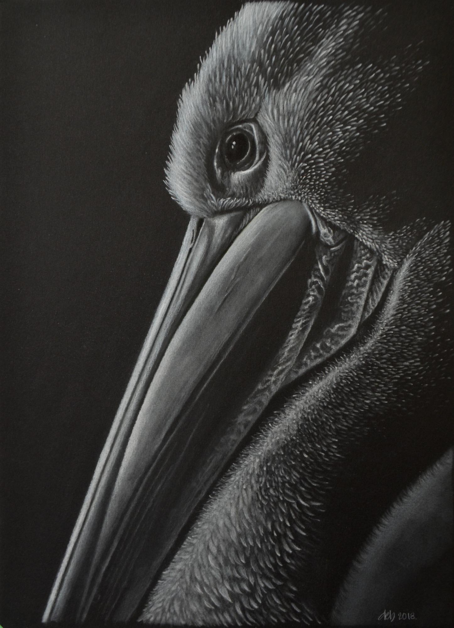 pelican_end1