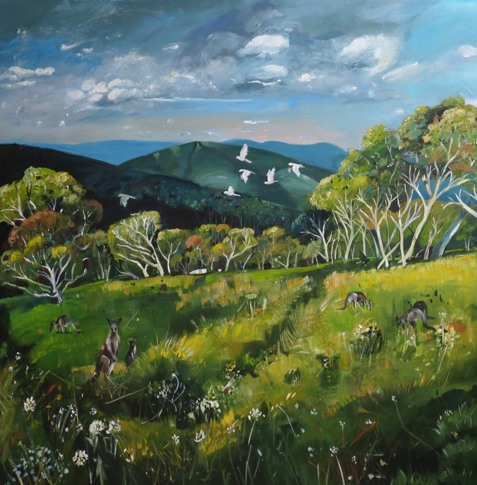 kangaroo meadow.jpg a