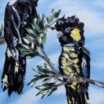Black Cockatoos under a blue sky