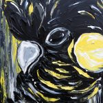 Sunny the Black Cockatoo