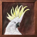 Daphne The Sulphur Crested Cockatoo