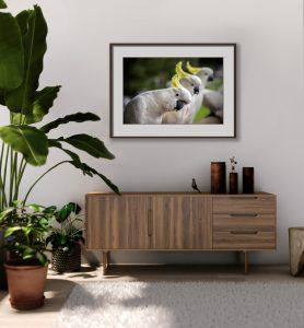 Cockatoo Room 4