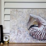 Nautilus Shell Art In Situ On Shelf Web Size Carmen Griffen
