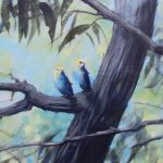 Pale Head Rosellas Breath of wind through branches